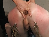 Submissive transsexual Mandy Mitchell